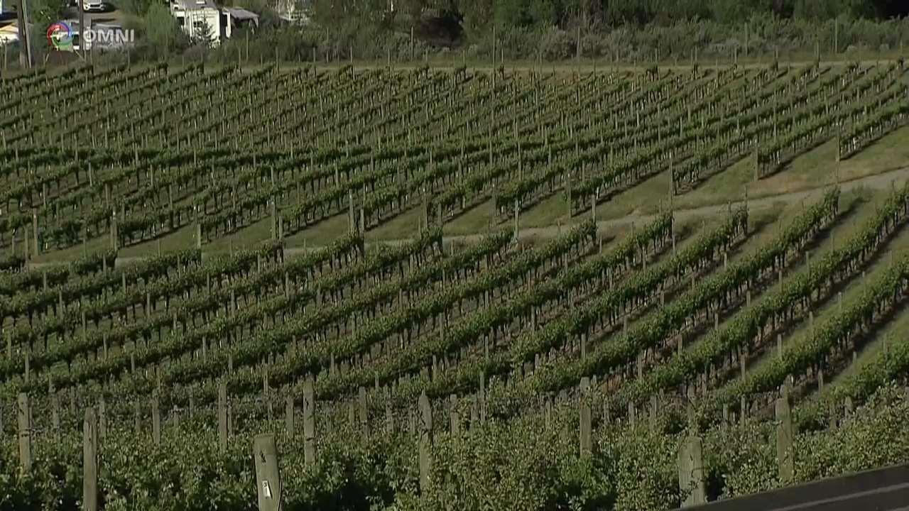 Cambiamento climatico: come sta influendo sui vini