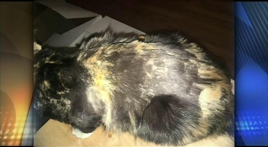 温哥华岛三人虐猫被控-NOV 23, 2017 (BC)