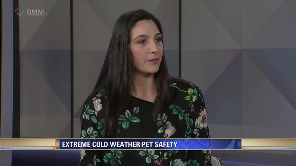 Pet safety during winter – Clip
